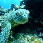 Enjoy Sea Turtle Season in Puerto Vallarta, Mexico