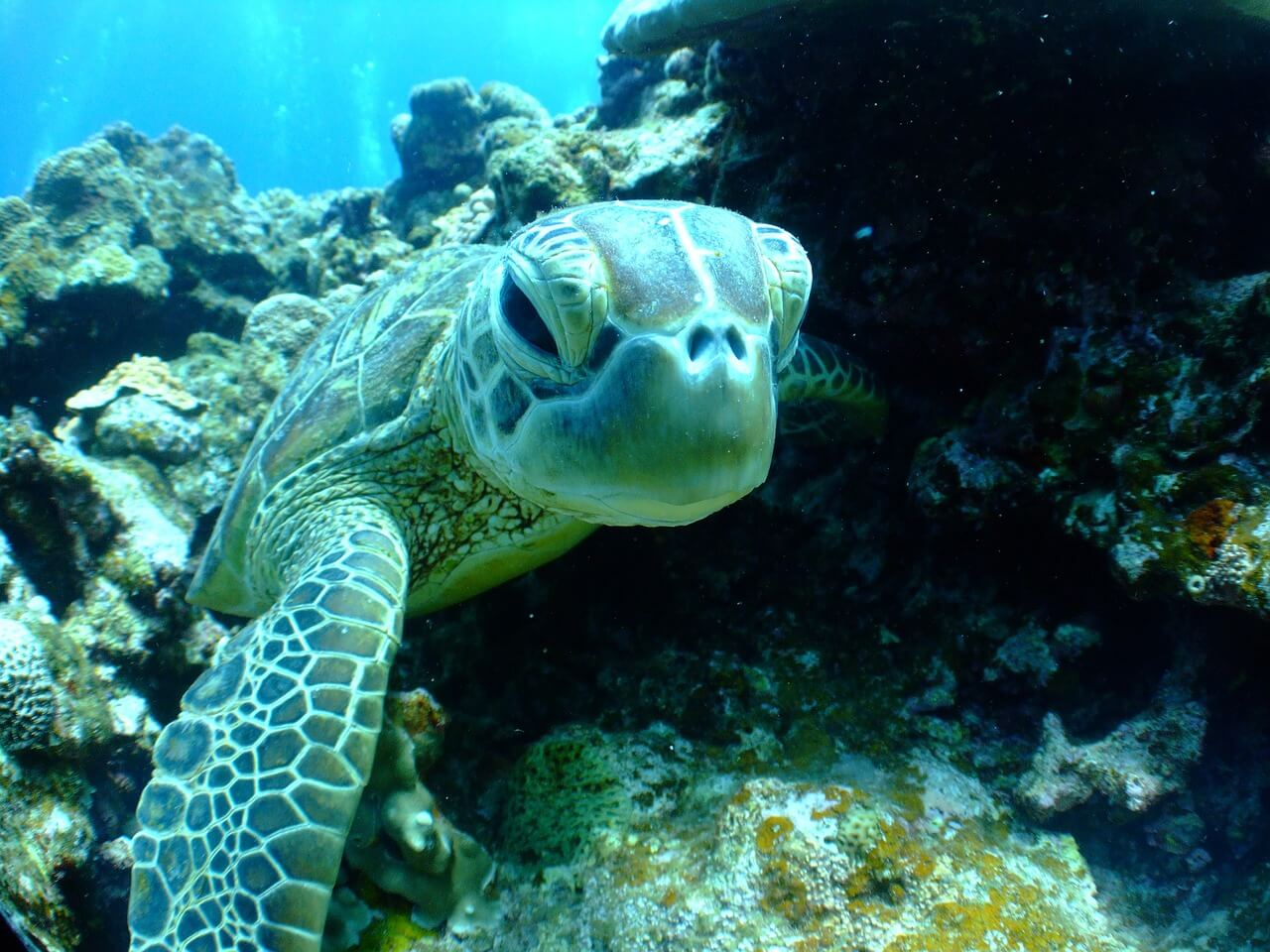 Enjoy Sea Turtle Season in Puerto Vallarta, Mexico